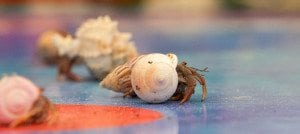 Virginia Beach Events - Mid-Atlantic Hermit Crab Challenge